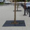 grille d'arbre Gaillac